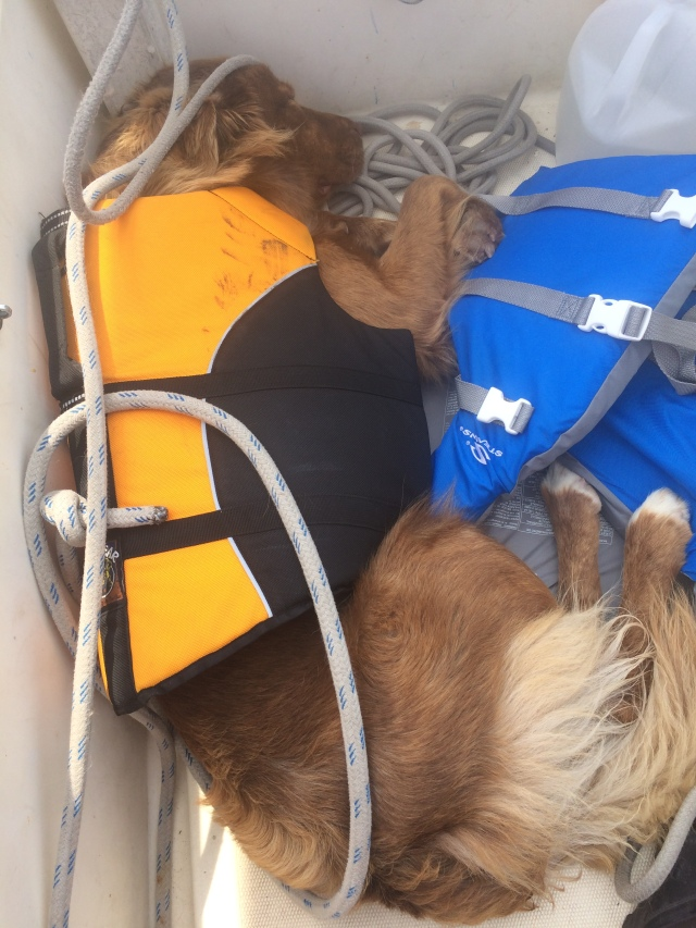 The life of a boat dog